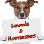 Leads & Harnesses