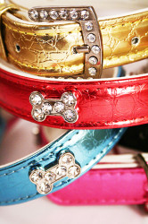 coloured metallic collars with diamante buckle and bone detail