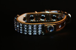 gold diamond dazzler collar